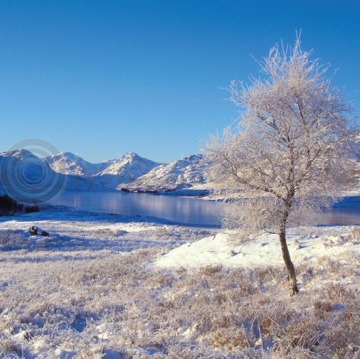Winter Loch Arklet & Arrochar Colour Photo Greetings Card