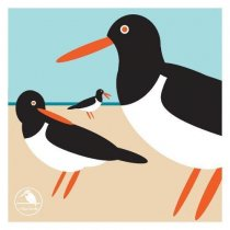 I Like Birds: Oyster Catcher Notecards (Apr)
