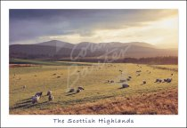 Abernethy, Cairngorms, Highlands Postcard (H Std CB)