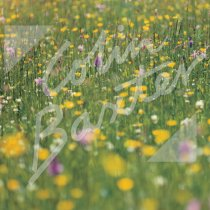 Machair, Western Isles Greetings Card (CB)