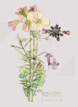 Cuckoo Flower - (2 sheets 2 tags) Gift Wrap Pack