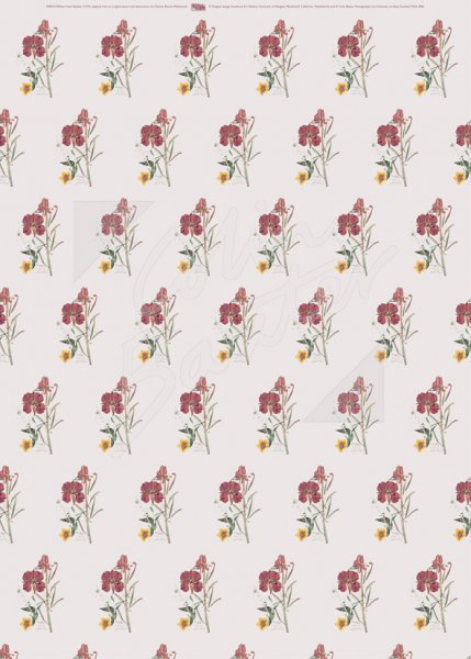 Willow Herb Gift Wrap Sheet