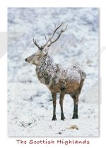 Red Deer Stag, Scottish Highlands Magnet (V CB)