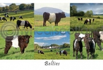 Belties Composite (HA6)