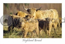 Highland Brood, Glen Lonan (HA6)