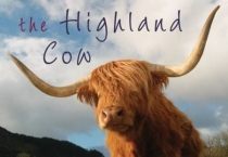 Highland Cow, The